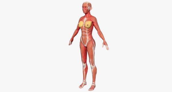 3d human female muscular