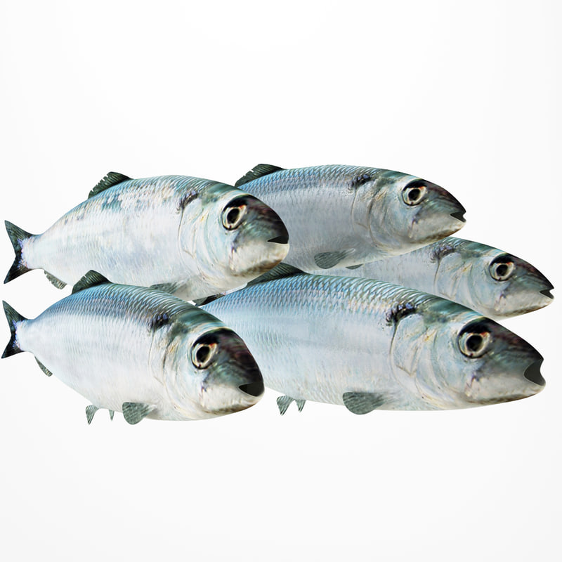 3ds herring fish