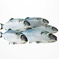3ds herring fish