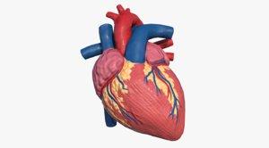 human heart 3d ma