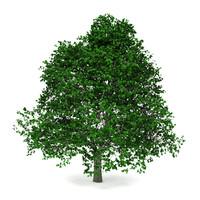 green tree max