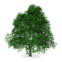 3d green tree model