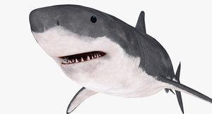 great white shark 3d c4d
