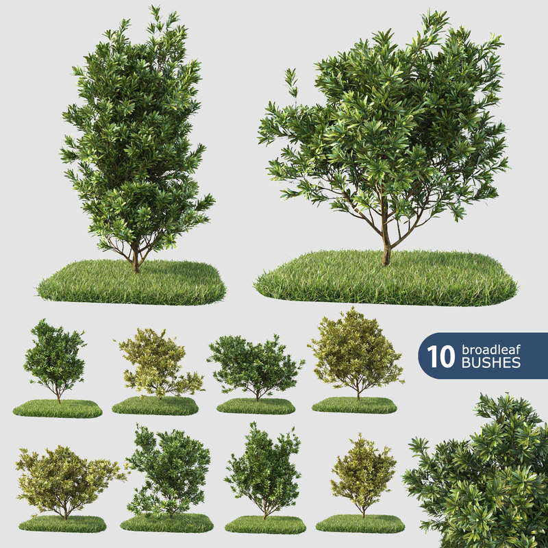 3d 10 broadleaf bushes model