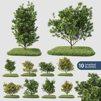 3d model 10 broadleaf bushes