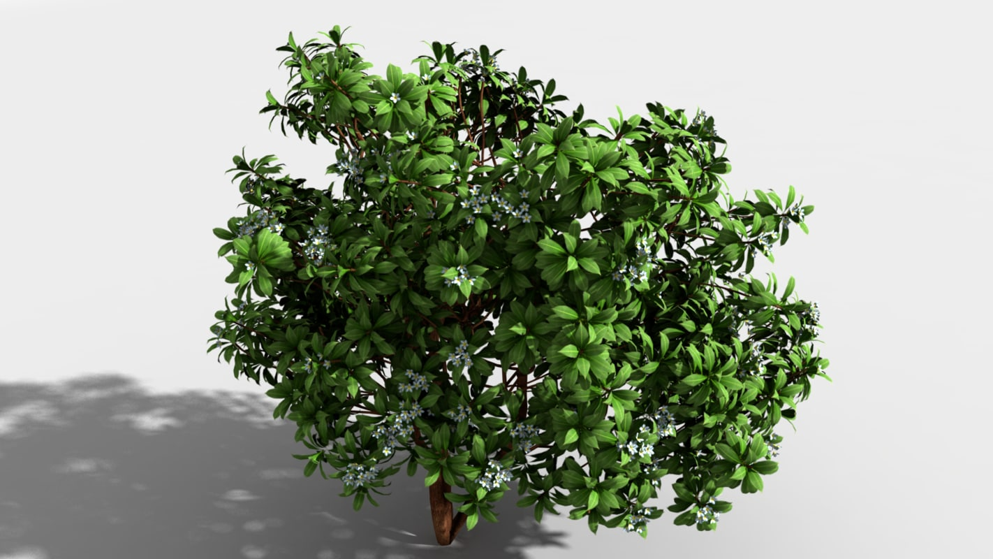 3d indian trees model