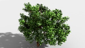 3d indian trees model