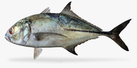 3d model bigeye trevally