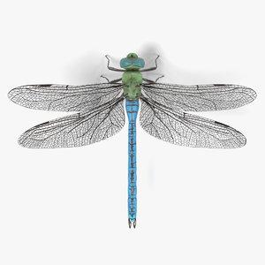 3d model emperor dragonfly