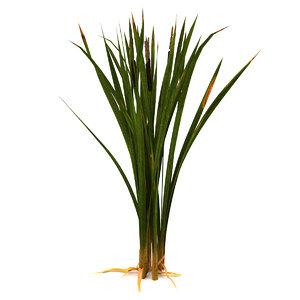 marsh reeds swamp 3d 3ds