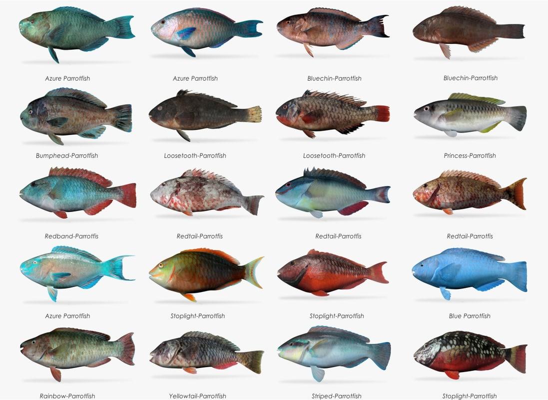 parrotfish fish 3d fbx