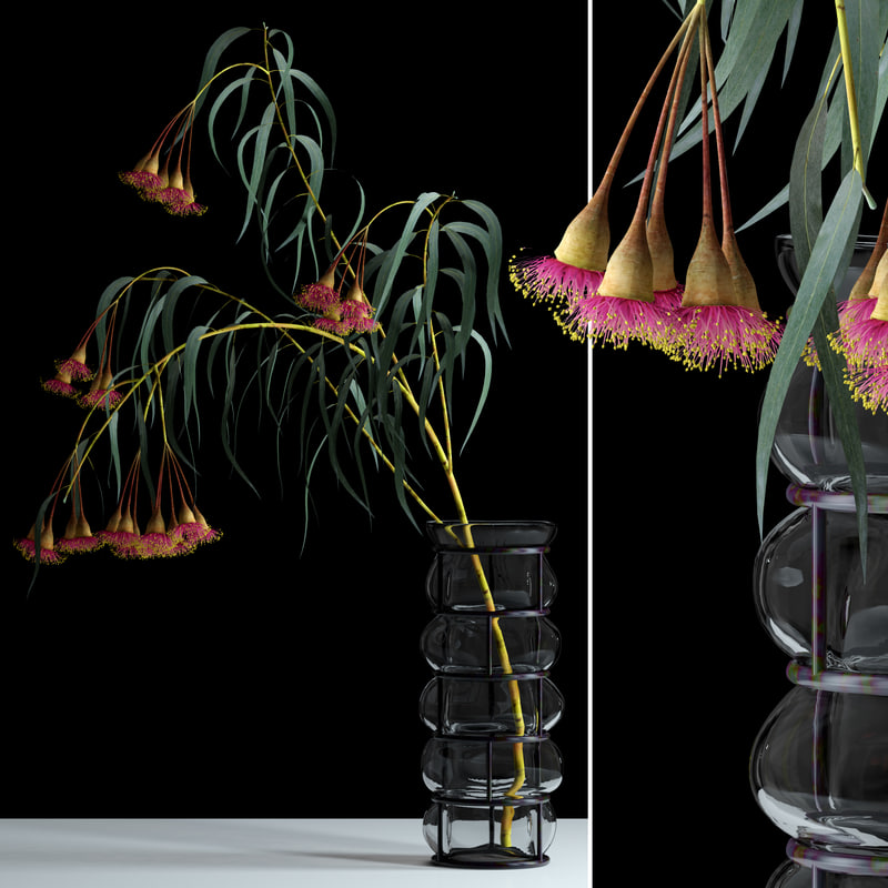 realistic bloom eucalyptus flowers max