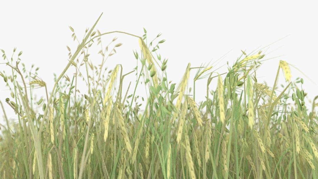 3d model of wheat field