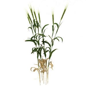 3d wheat plant model