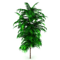 tree bush max