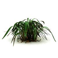 marsh grass 3d max