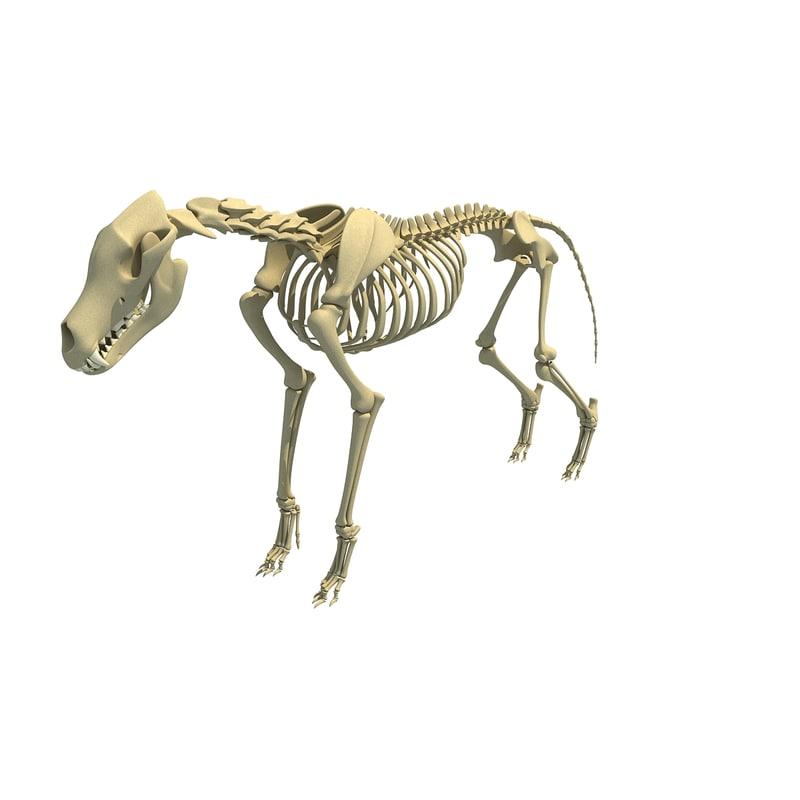 Wolf Skeleton Animal 3d Model