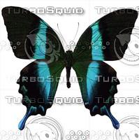 Butterfly8 Papilio Nireus