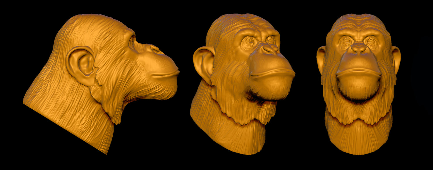 chimpanzee chimp head 3d model
