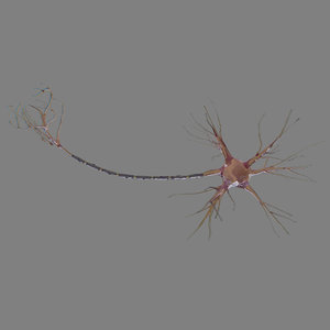 neuron cell fbx