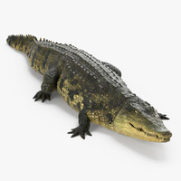 crocodile walking 3d model