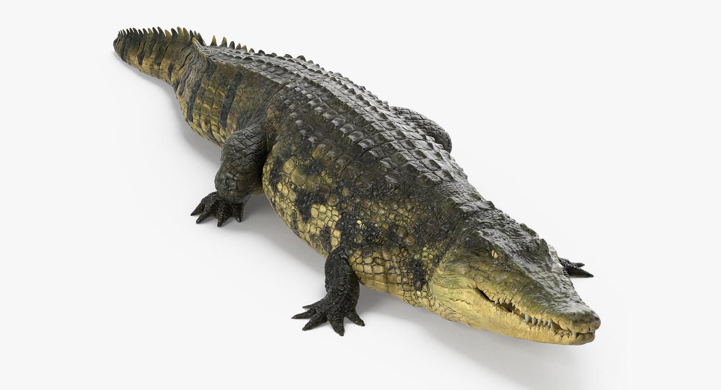 crocodile walking 3d model