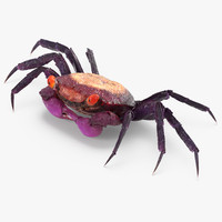 3d purple vampire crab geosesarma model