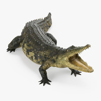 Crocodile Attacks Pose 3D Model
