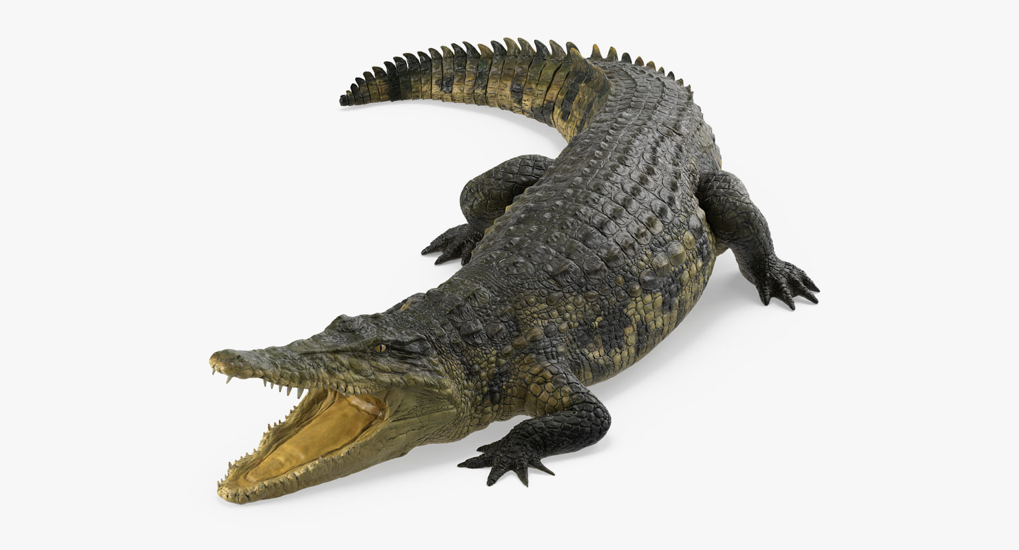 crocodile attacks pose 2 3d model