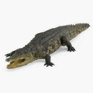 crocodile croc 3d x