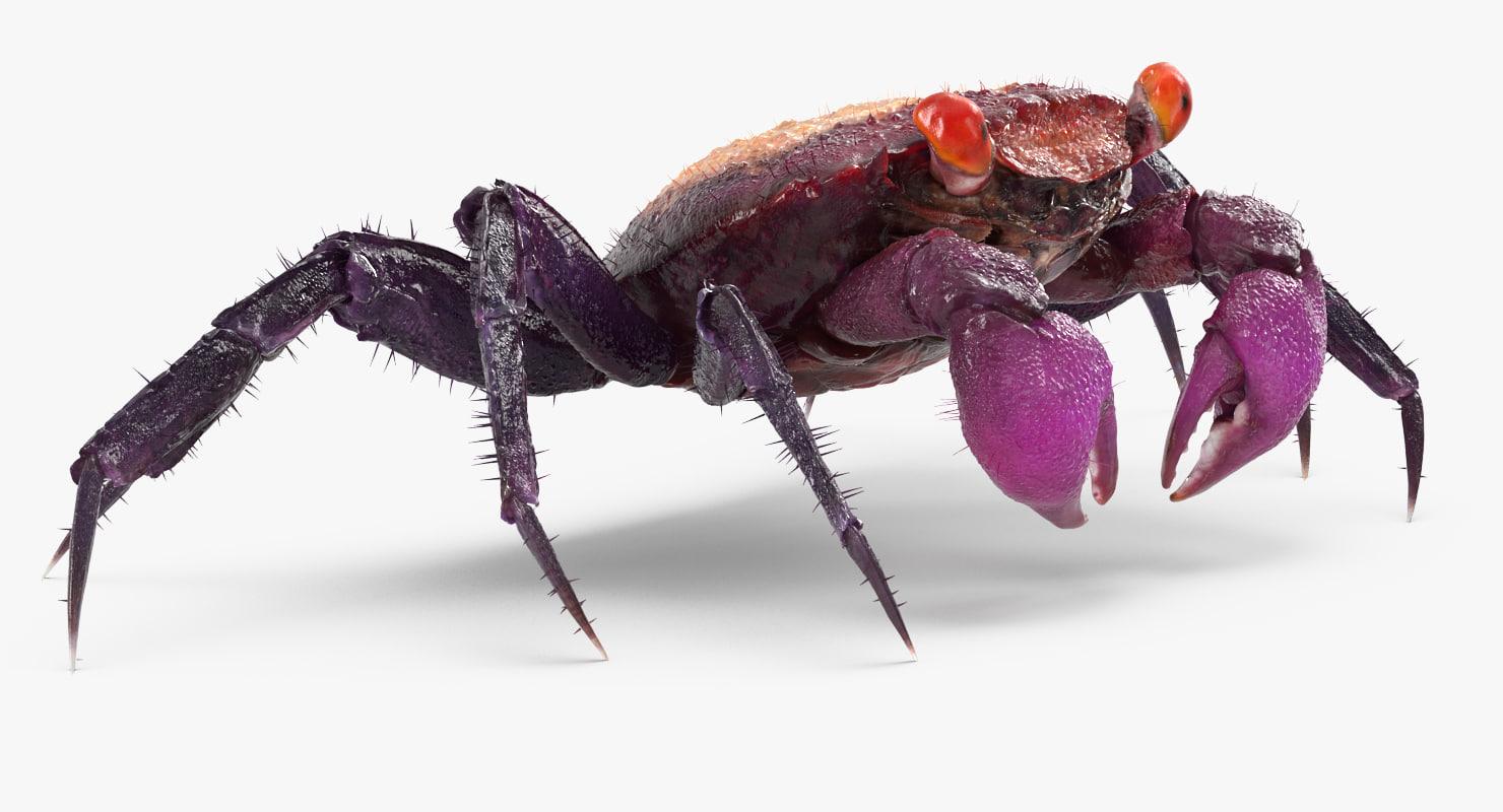 vampire crab geosesarma fur max