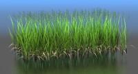 3d model zizania grass