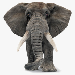 max africa elephant african