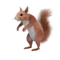 3d model red squirrel
