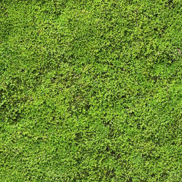 Texture Other moss texture seamless