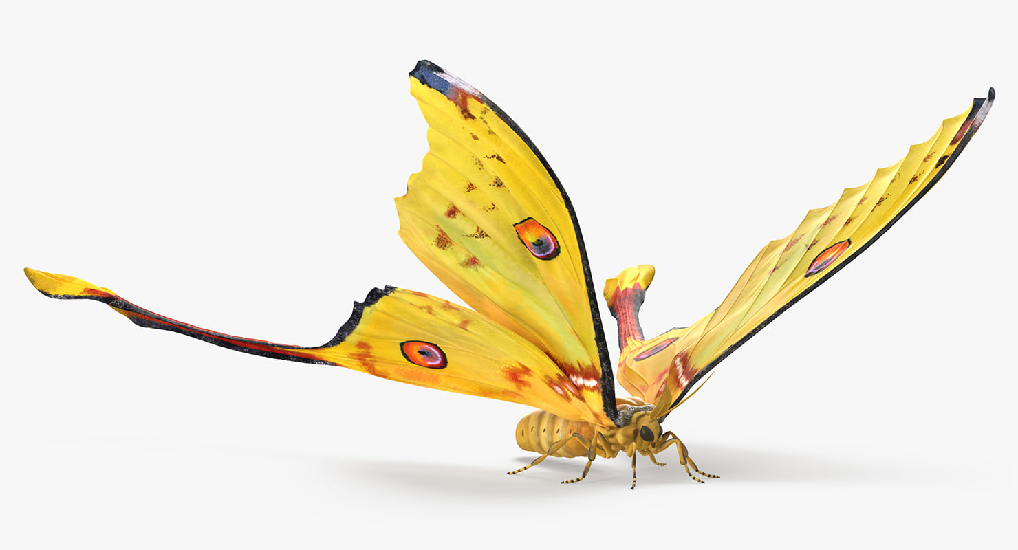 3d madagascan moon moth
