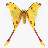 Madagascan Moon Moth with Fur 3D Model