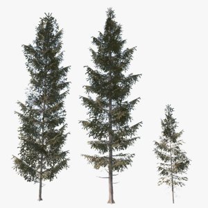 3d ready spruce trees