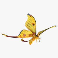 Comet Moth Flying Pose with Fur 3D Model