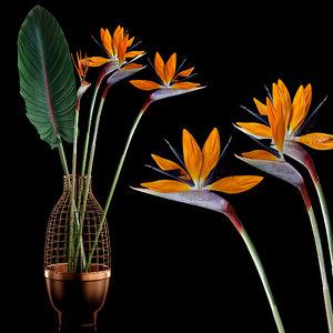 realistic strilicia flowers grid 3d model