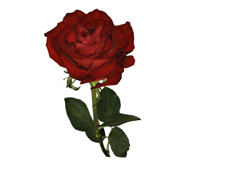 rose flower s 3d model