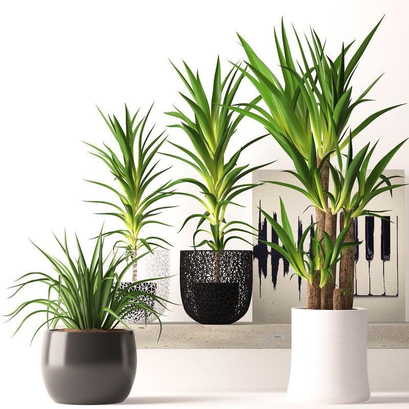 max contemporary houseplants
