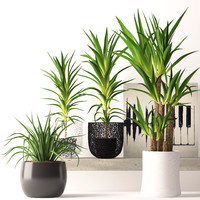 contemporary houseplants 3d max