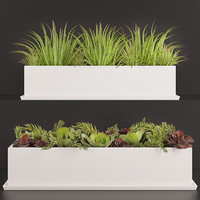 House plant set 2