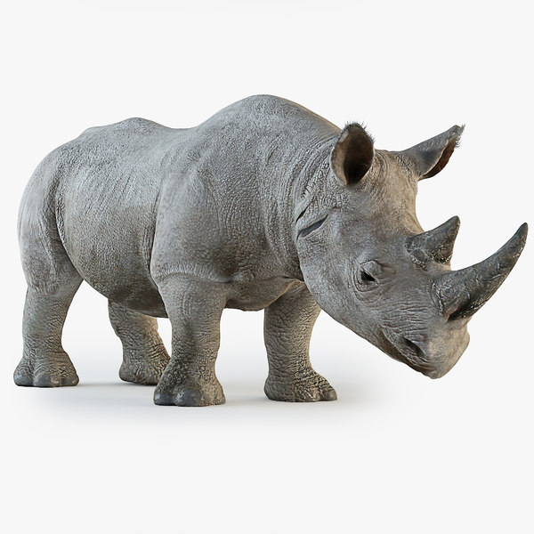max rhinoceros rhino