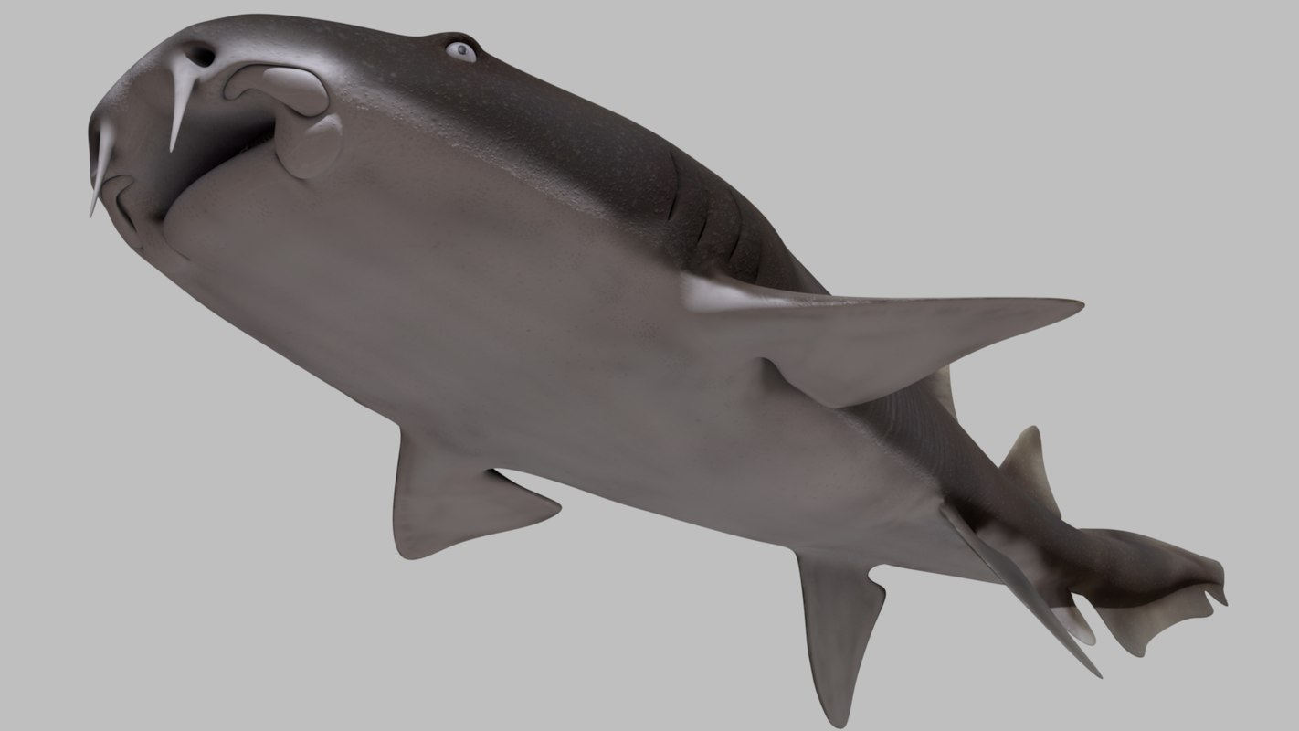 nurse shark 3d model
