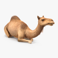 camel sitting pose fur 3d model