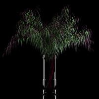 realistic agonis flowers 3d fbx