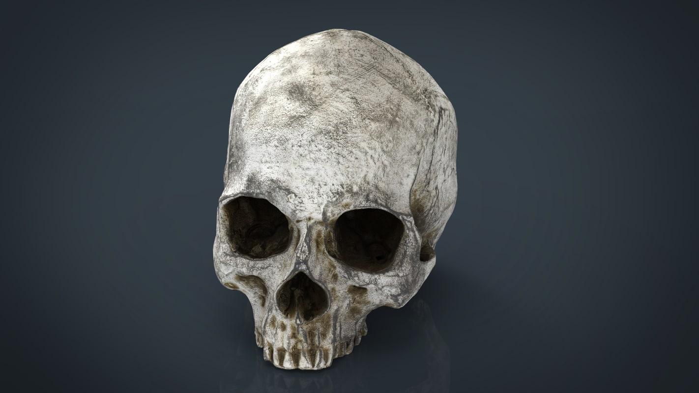 realistic skull 3d obj