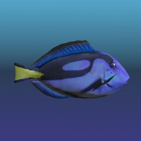 3d Low Poly Blue Tang Fish
